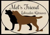 Mels Friend Labrador Retriever